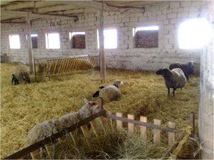 кормушки, овцы