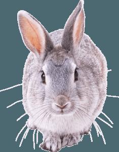 Система летнего содержания кроликов