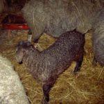 кооператив по ведению животноводства