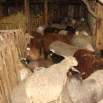Строительство фермы, безфундаментная ферма