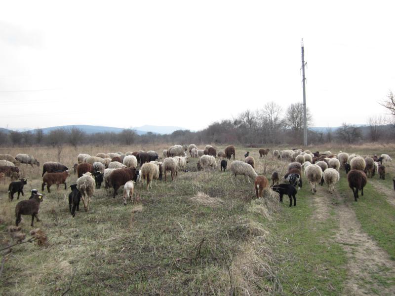 Создание животноводческого обслуживающего кооператива