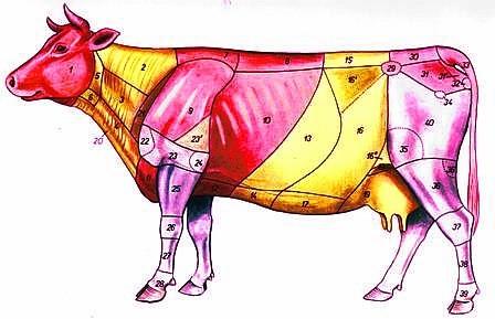 Области коровы