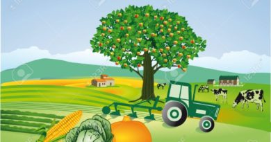 Уборка зерновых в Ульяновской области близится к завершению