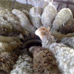 Модель кормушки для овец