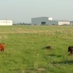 Технологическая карта обслуживания фуражной коровы
