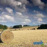 Расчет по заготовке сена