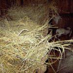 Рынок сена