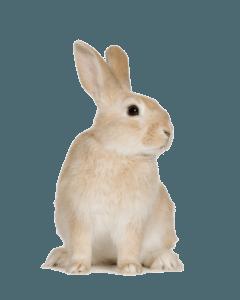 Рационы для кроликов
