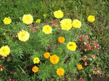 Ягодки – цветочки